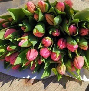 Tulpe roza