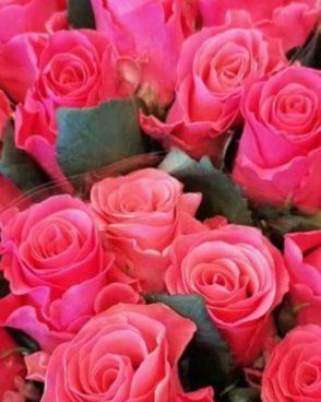 Roze Pink Tacazzi