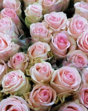 Roze Revival Sweet