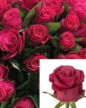 Roze Takazzi+