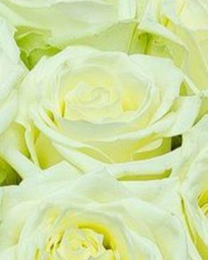 Roze White Naomi