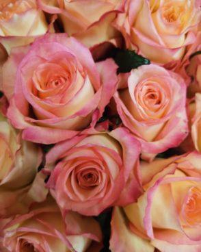 Roze Duett