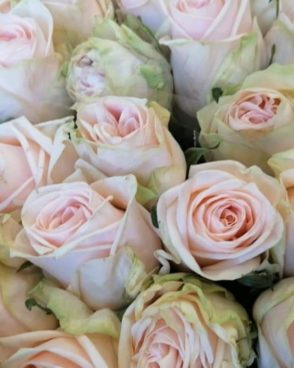 "Roze ""Wedding""'"