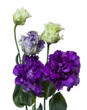 Citi ziedi