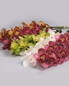Cimbidium Mix